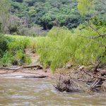 Canyon del Sumidero - Coccodrillo