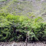 Canyon del Sumidero - Cormorano