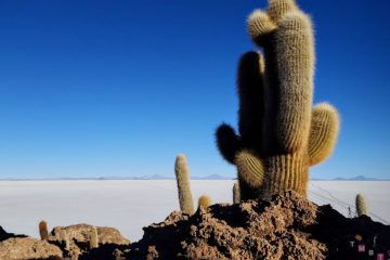 dettaglio-cactus-isla-incahuasi