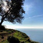 albero sentiero degli dei