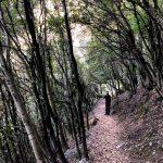 bosco sentiero degli dei