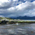 isola degli uccelli - canale di beagle ushuaia