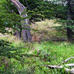 huemul sentiero laguna torre