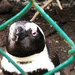 dettaglio pinguino