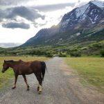 cavallo in libertà torres del paine