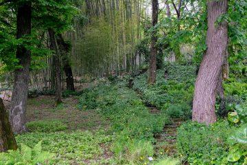Vista foresta bambu orto botanico