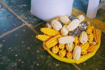 mercato cusco - dettaglio pannocchie