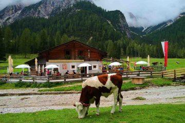 mucca e malga grunwaldam braies