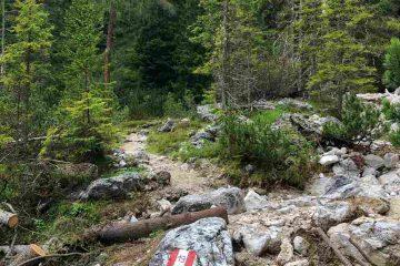 sentiero 19 verso malga fojedora